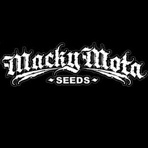 Macky Mota Seeds | Fifi | Regular Seeds